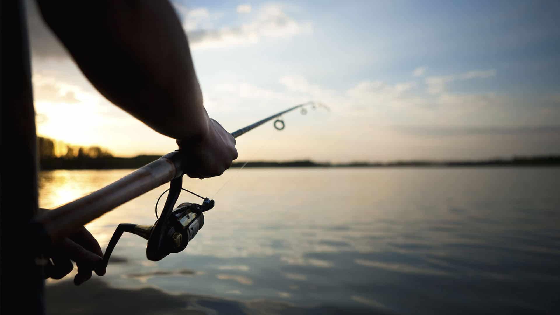 Fischadlertour
